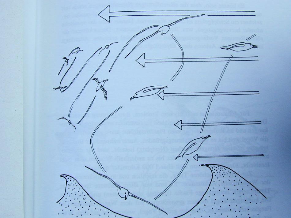 Schon vor über 100 Jahren wurde das Konzept des dynamischen Segelns von Nobelpreisträger Lord John Strutt, 3. Baron Rayleigh, entwickelt. Doch das vor kurzem veröffentlichte Modell verfeinert das ursprüngliche Modell und entwickelt es weiter. Bild: Toni Bürgin, David Senn