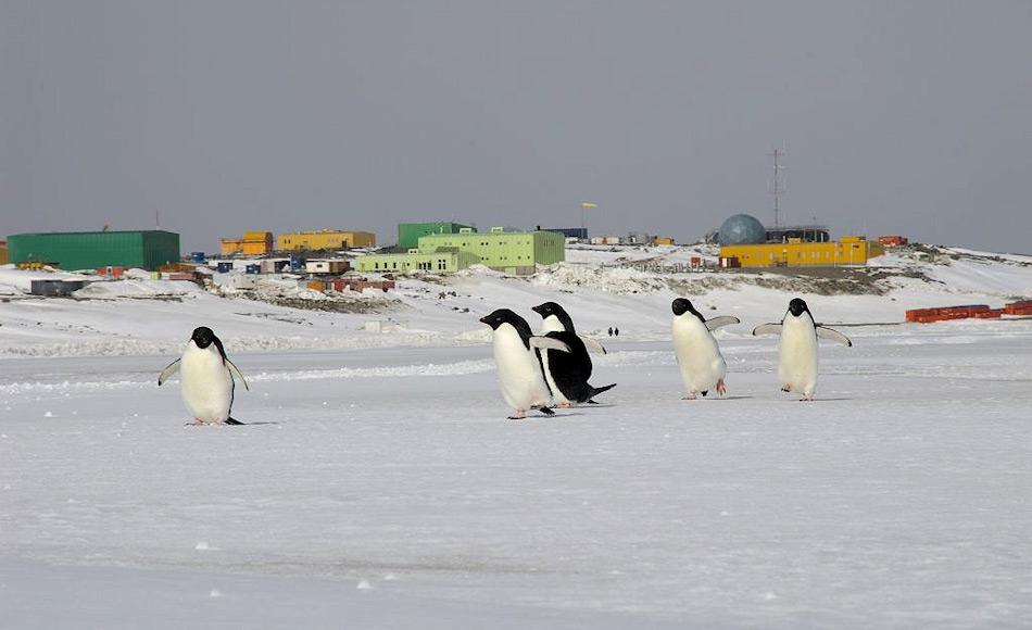 Die australische Antarktis-Station Davis liegt in der Ostantarktis, driekt an der Küste der eisfreien Vestfold Hills. Sie besteht aus 29 Gebäuden, von denen einige nicht mehr genutzt werden, aber zur Liste der Commonwealth Heritage gehören. Bild: AAD, Matt Low