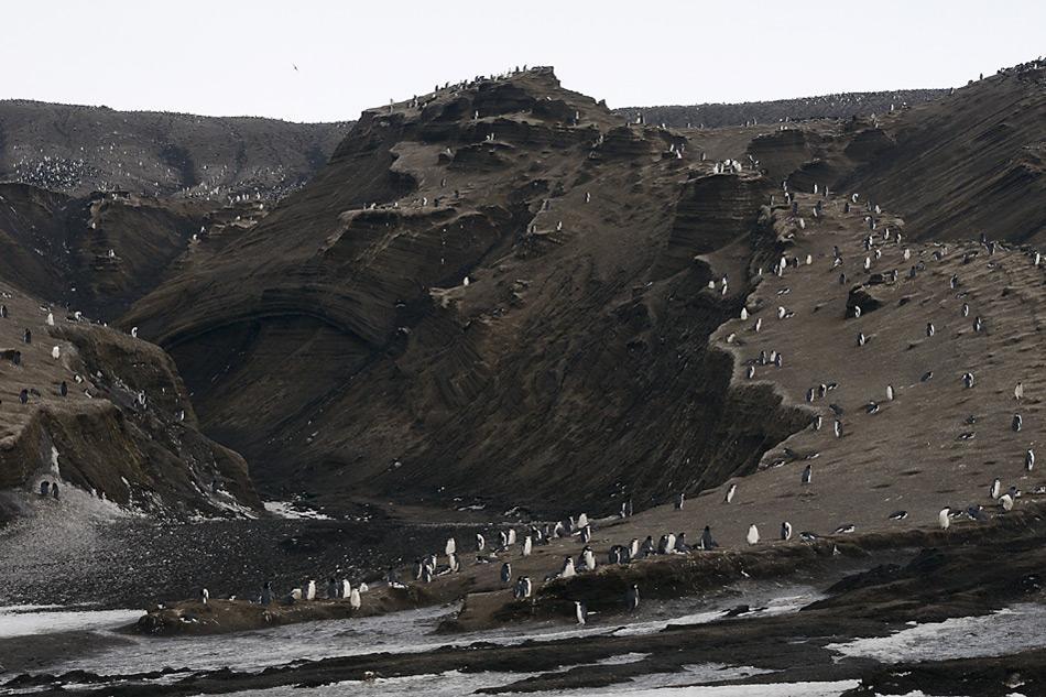 003 Suedsandwich Insel Brutplaetze der Zuegelpinguine auf Saunders Island