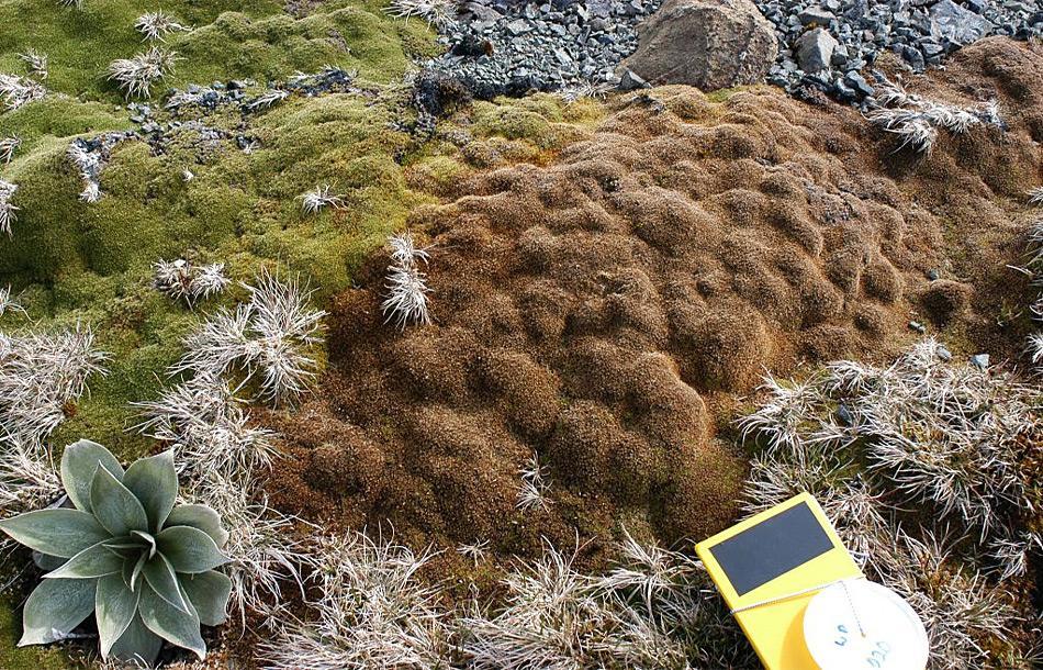 Durch die langen Trockenperioden, wo nicht genügend Feuchtigkeit herrscht, sterben die speziell angepassten Pflanzen rapide ab. Bild Dana Bergstrom