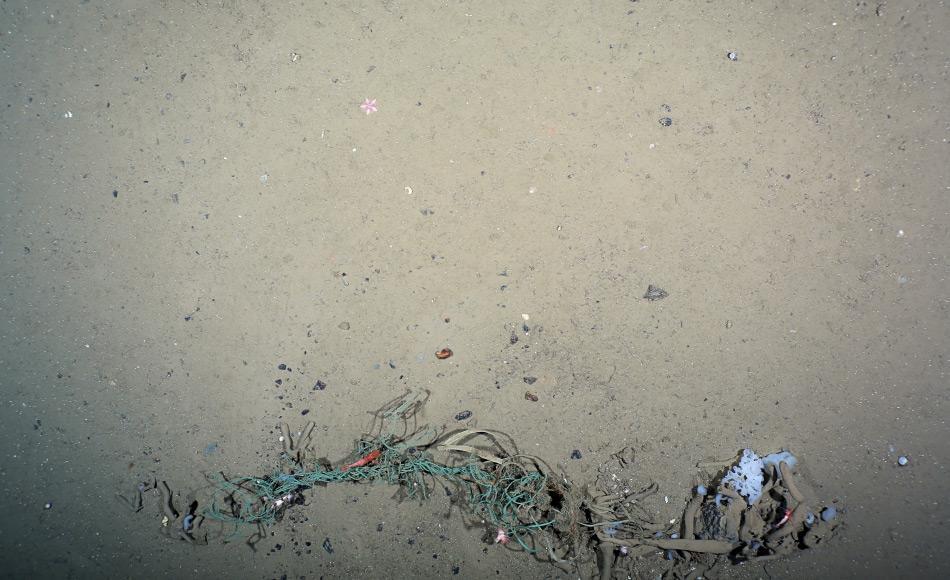Neben Alltagsmüll finden sich auch andere gefährliche Stücke, wie dieses Stück Plastiknetz am HAUSGARTEN, dem Tiefsee-Observatorium des Alfred-Wegener-Instituts in der Framstraße. Diese Aufnahme stammt vom OFOS-Kamerasystem aus 2500 m Tiefe. (Foto: Melanie Bergmann, OFOS)