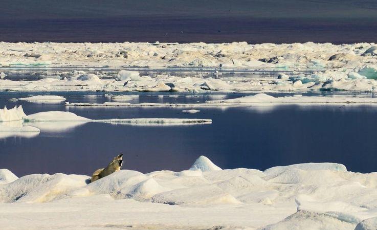Das Packeis im Arktischen Ozean ist ein echter Lebensraum für eine Vielzahl von Tieren und Algen.