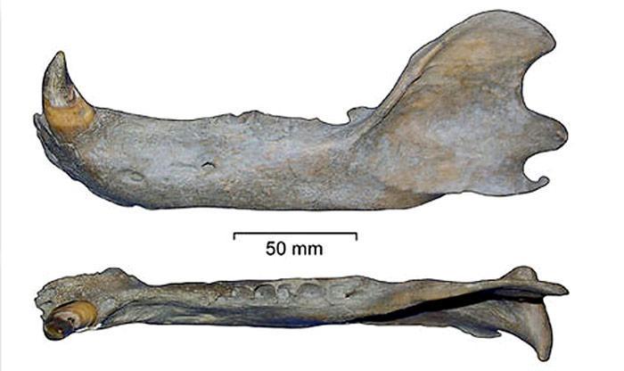 Fossilienfund_-_Spitzbergen