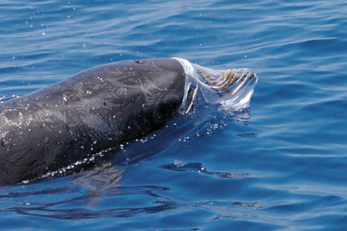 spielender-Delfin