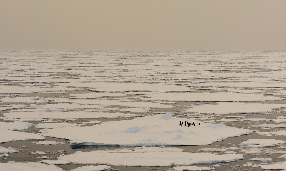 Obwohl Wissenschaftler insgesamt eine Zunahme des antarktischen Meereises registrierten, zeigen einige Gebiete klare Anzeichen von Erwärmung und dem Verlust von Meereis. In dieser Saison war der gesamte Kontinent davon betroffen, auch das Rossmeer. Bild: Michael Wenger