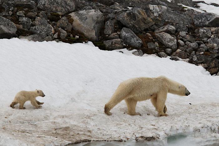 013_spitzbergen_2010