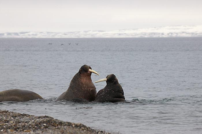 039_spitzbergen_2010