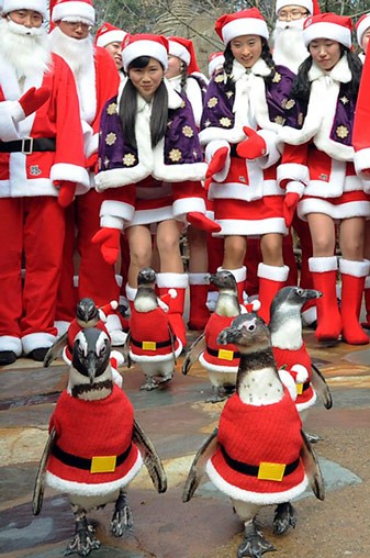 Pinguinparade_in_Korea